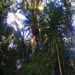 images/stories/Tour-nord-Madagascar/nord-madagascar-foret.jpg